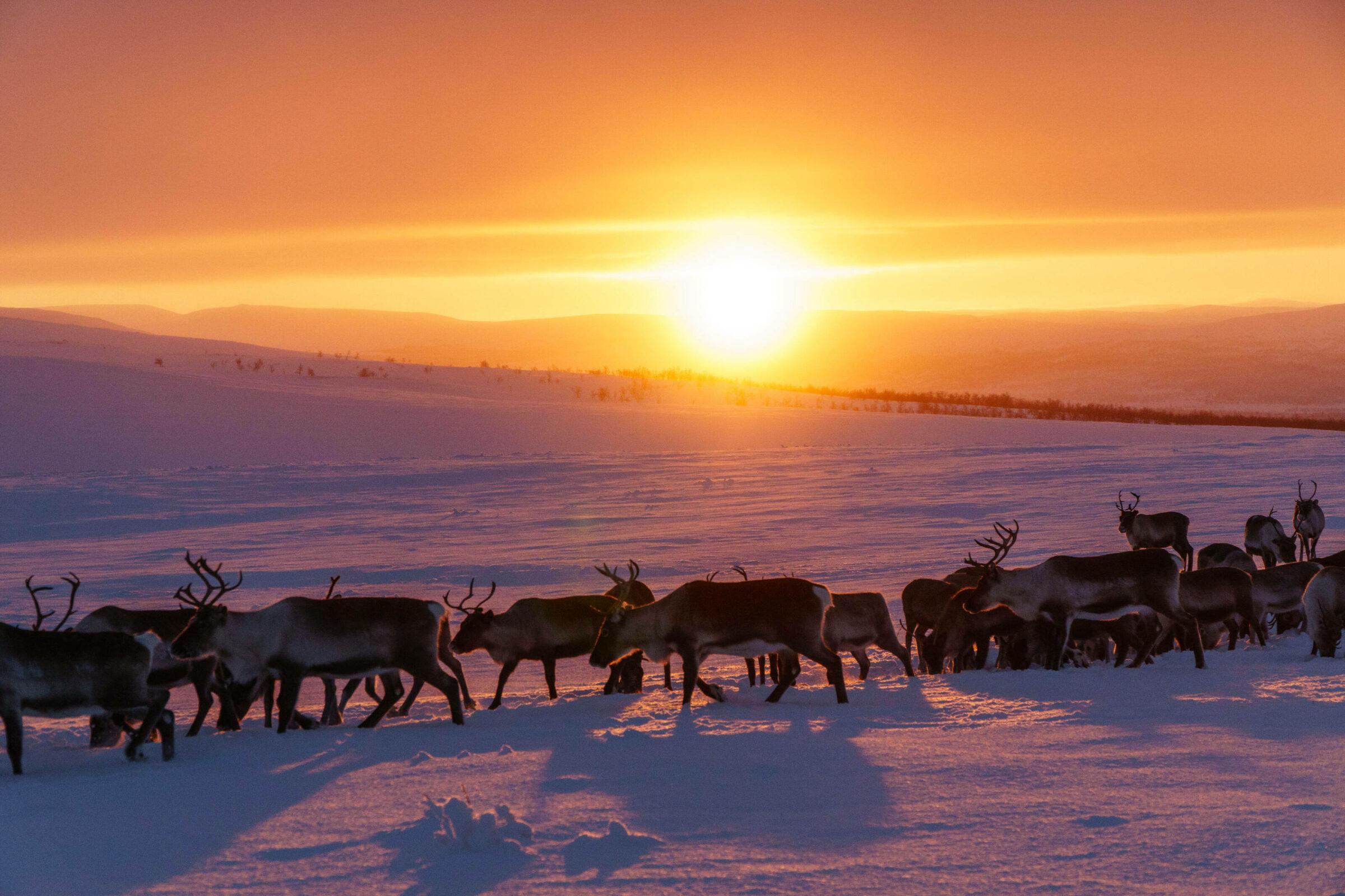 Arctic Land Adventure  Design.GarethHutton 00352 kopio 2 - Happy finnish Valentine's Day!